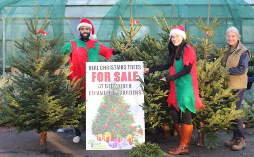 Christmas Trees for Sale: From €80 EUR per Metre